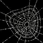 #521 Spider's web